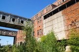 Overgrown ruins of old factory