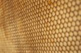 détail alvéoles dans une ruche d'abeilles
