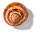 Single snail shell, escargot de Bourgogne, with shadow, isolated on white background