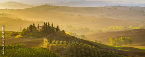 Staande foto Wijngaard Fairytale, misty morning in the most picturesque part of Tuscany, val de orcia valleys