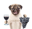 Dog holding a grape and wineglass. isolated on white background