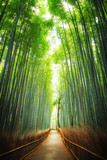 Pathway through the bamboo grove Kyoto © Rixie