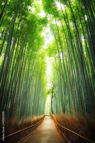 Fotobehang Kyoto Pathway through the bamboo grove Kyoto