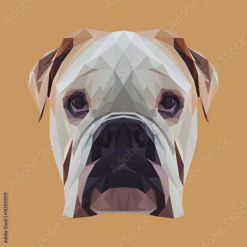 English bulldog dog animal low poly design. Triangle vector illustration. © shekularaz