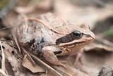 pink frog after hibernation