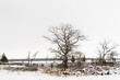 Winter Trees in the rural countryside of Canada