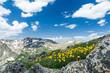 Wild Flowers Bloom in Colorado Spring Mountain Landscape