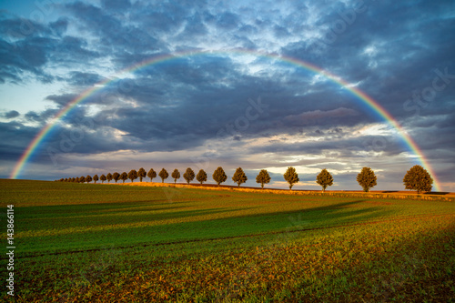 tree in the field, young green rye and rainbow