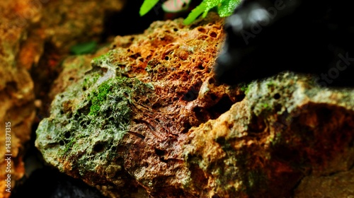 Tuinposter Bos rivier Moss rock