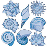 Set of colored sea shells. Isolated vector objects on white background.