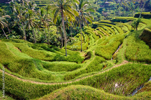 Deurstickers Rijstvelden Beautiful landscape with rice terraces and coconut palms near Tegallalang village, Ubud, Bali, Indonesia.