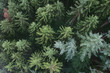 Coniferous forest from above