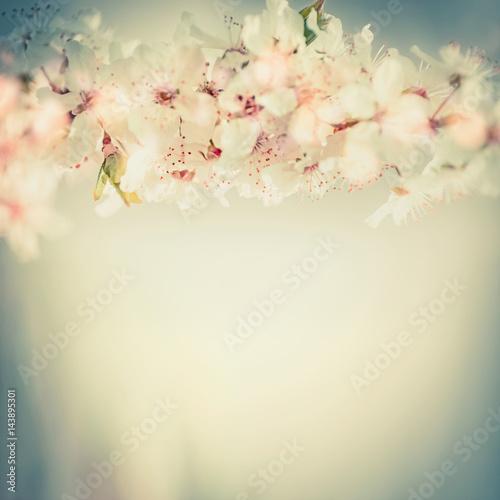 Fototapeta Close up of cherry blossom, springtime floral border in pastel color