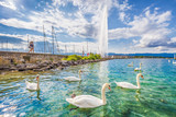 Fototapety Swans on Lake Geneva with famous Jet d'Eau water fountain in the background in summer, Geneva, Switzerland