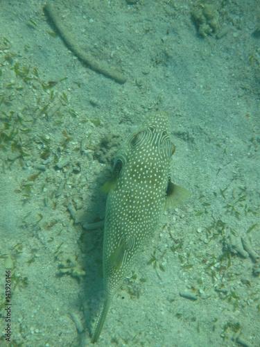 barriera corallina e pesce nel mar rosso Poster