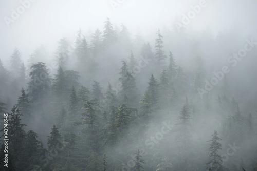 Trees on mountains on foggy morning in Alaska - 143946945