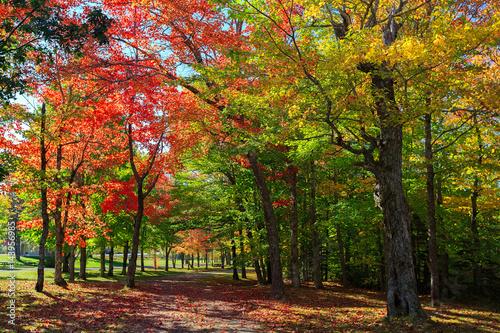 Brilliant fall foliage in rural Nova Scotia, Canada. © onepony