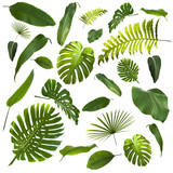 Tropical Leaves Background - 143967169