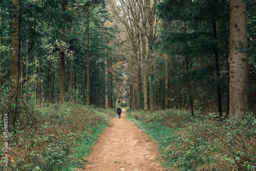 Female tourist with black coat walking on forest path. Rear view.