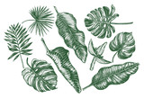 Ink hand drawn set of tropical leaves and flowers - Banana leaves, monstera, palm leaves. Botanical elements collection for design, Vector illustration. - 143989953