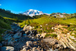 Mount Rainier rising above Myrtle Falls Creek and Paradise meadows on its lower slopes