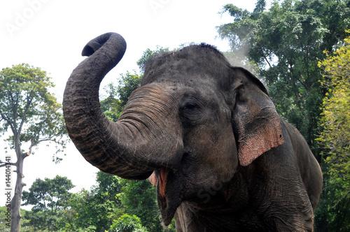 Poster Sumatera Elephant