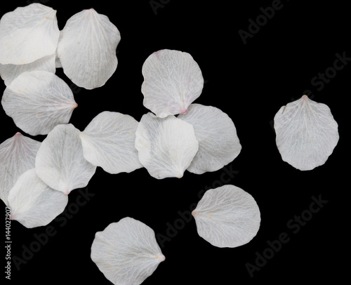 White Petals Of Flowers On A Black Background Buy Photos Ap