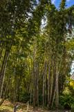 South Florida Bamboo
