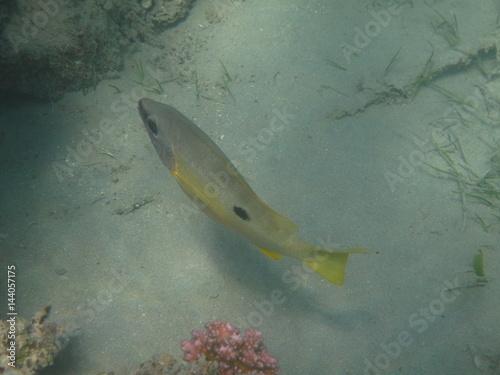 coralli e pesci del mare Poster