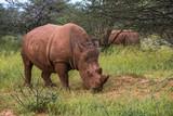 White rhino, Waterberg Plateau National Park, Namibia