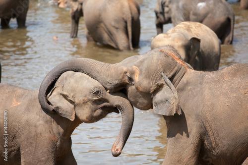 Poster Elephant embraces a baby elephant