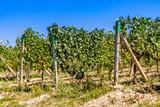 Moravian vineyard, Czech republic