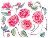 Watercolor floral set of camellia flowers - 144133999