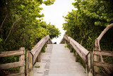 Pathway between the trees at the Beach  - 144150564