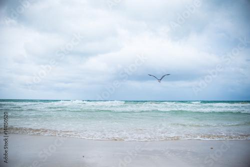 Birds in Flight over Miami Beach Landscape  - 144150520