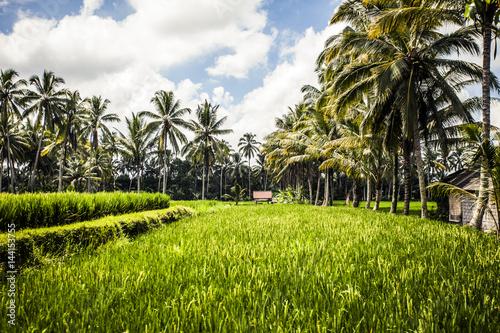 Fotobehang Bali Rice paddy