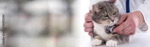 Fototapeta Veterinarian examining a cat
