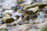 Frogs sitting on the shore.