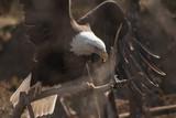 Wings Outspread