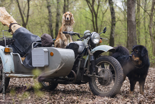 Staande foto Scooter Dog and old motorcycle