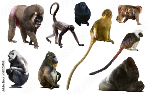 Poster collection of different monkeys