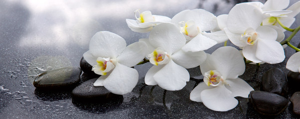 White orchid and black stones close up. © Swetlana Wall