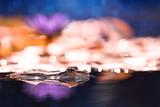 Wasserfrosch im Gegenlicht mit Seerose