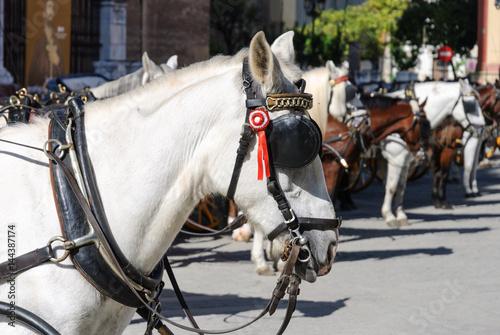 wartende pferde in sevilla waiting horses in sevilla