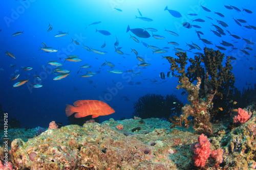 Fotobehang Koraalriffen Underwater coral reef and fish in ocean