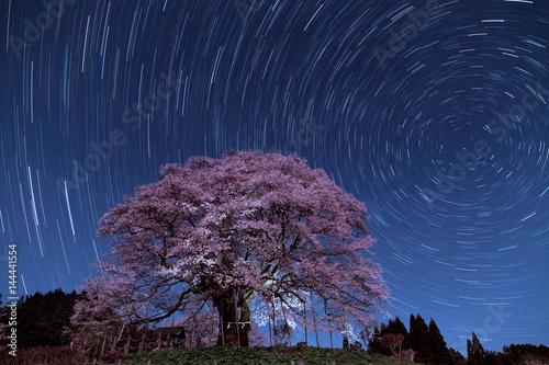 醍醐桜と日周運動 Poster