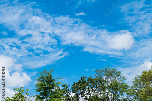 tree and blue sky background Poster