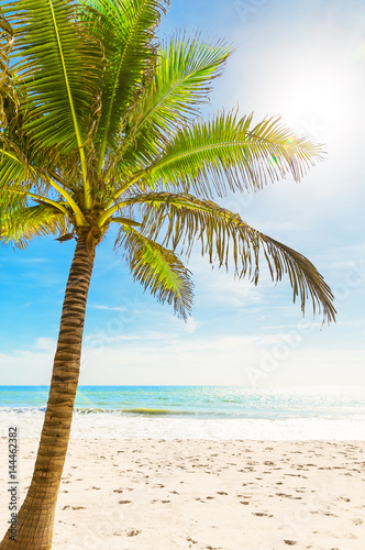 Beautiful tropical white beach and coconut palm trees.