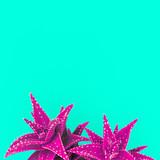 Aloe Fuchsia Minimal Creative Idea - 144466157