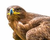 Adler Portrait